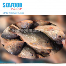 Red snapper (ikan merah) 红鱼 GW ± 1kg