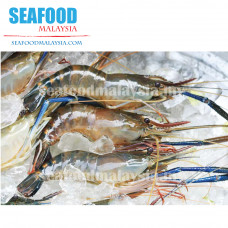 Fresh water Prawn (Udang Galah- U10) 冷冻生虾 NW 0.9kg